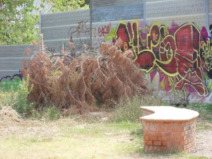 19. Un 'giardino'... dettaglio 1
