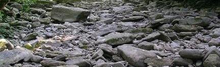 Sito di Importanza Comunitaria Giogo-Colla di Casaglia, Il Veccione prima della confluenza col Rovigo, Foto Idra, 4.9.'05