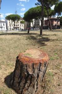 piazza-tronchi-ceppi-e-messaggi-4
